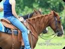 Подарочный сертификат на прогулку на лошадях, мастер-класс катания на лошадях